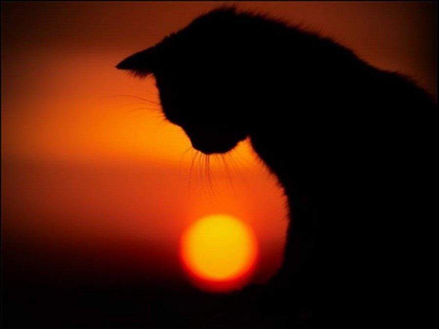 Классные картинки на аву черная кошка (22)