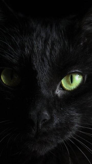 Классные картинки на аву черная кошка (25)