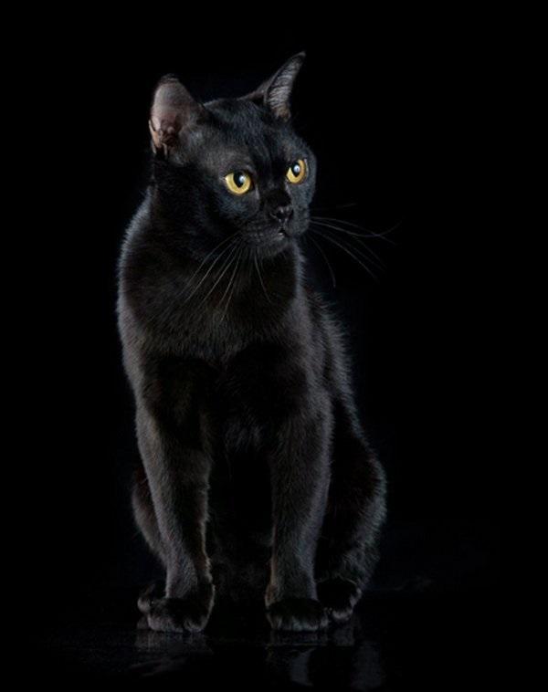 Классные картинки на аву черная кошка (26)