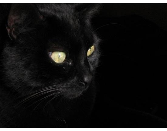 Классные картинки на аву черная кошка (3)