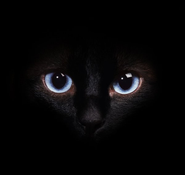 Классные картинки на аву черная кошка (8)