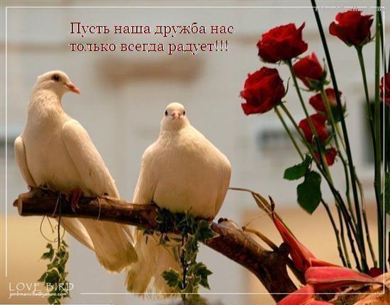 Мне с тобой так хорошо - красивые картинки и открытки (7)