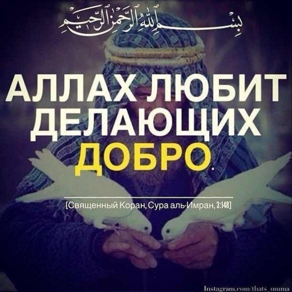 Мудрые картинки со смыслом об Исламе (3)