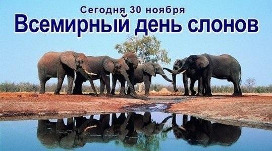 Всемирный день слона 12 августа, праздник - картинки (1)