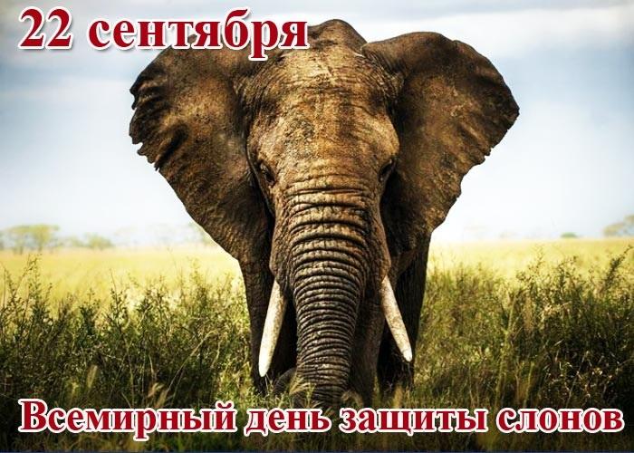 Всемирный день слона 12 августа, праздник - картинки (12)