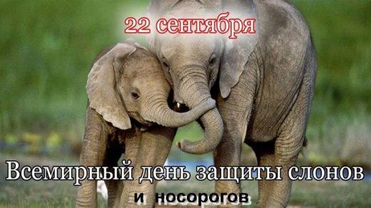 Всемирный день слона 12 августа, праздник   картинки (13)