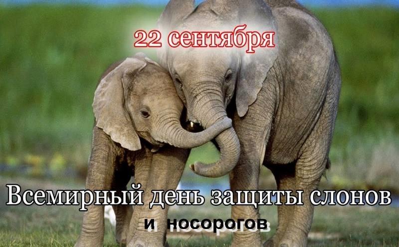 Всемирный день слона 12 августа, праздник - картинки (13)