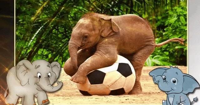 Всемирный день слона 12 августа, праздник - картинки (16)