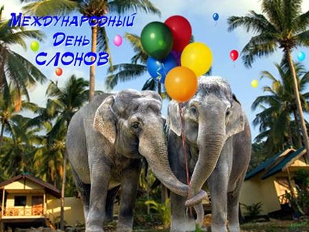 Всемирный день слона 12 августа, праздник - картинки (17)