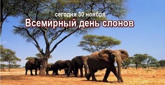Всемирный день слона 12 августа, праздник - картинки (18)