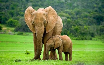 Всемирный день слона 12 августа, праздник - картинки (2)