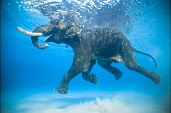 Всемирный день слона 12 августа, праздник - картинки (20)