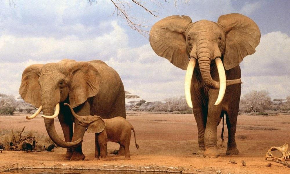 Всемирный день слона 12 августа, праздник - картинки (4)