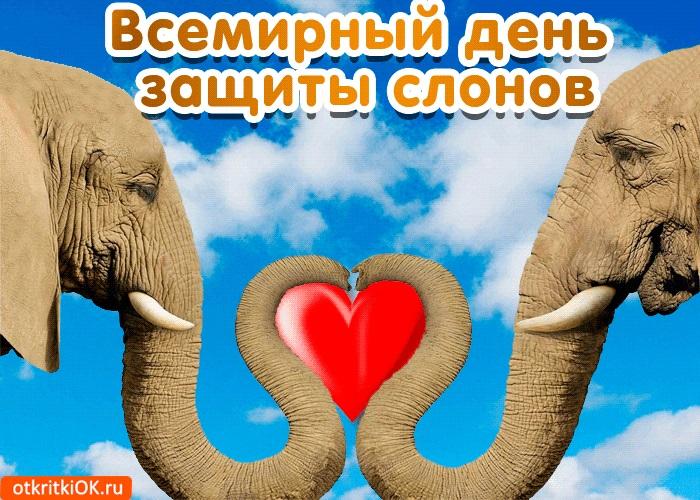 Всемирный день слона 12 августа, праздник - картинки (5)