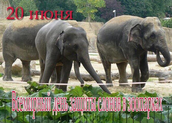 Всемирный день слона 12 августа, праздник - картинки (7)