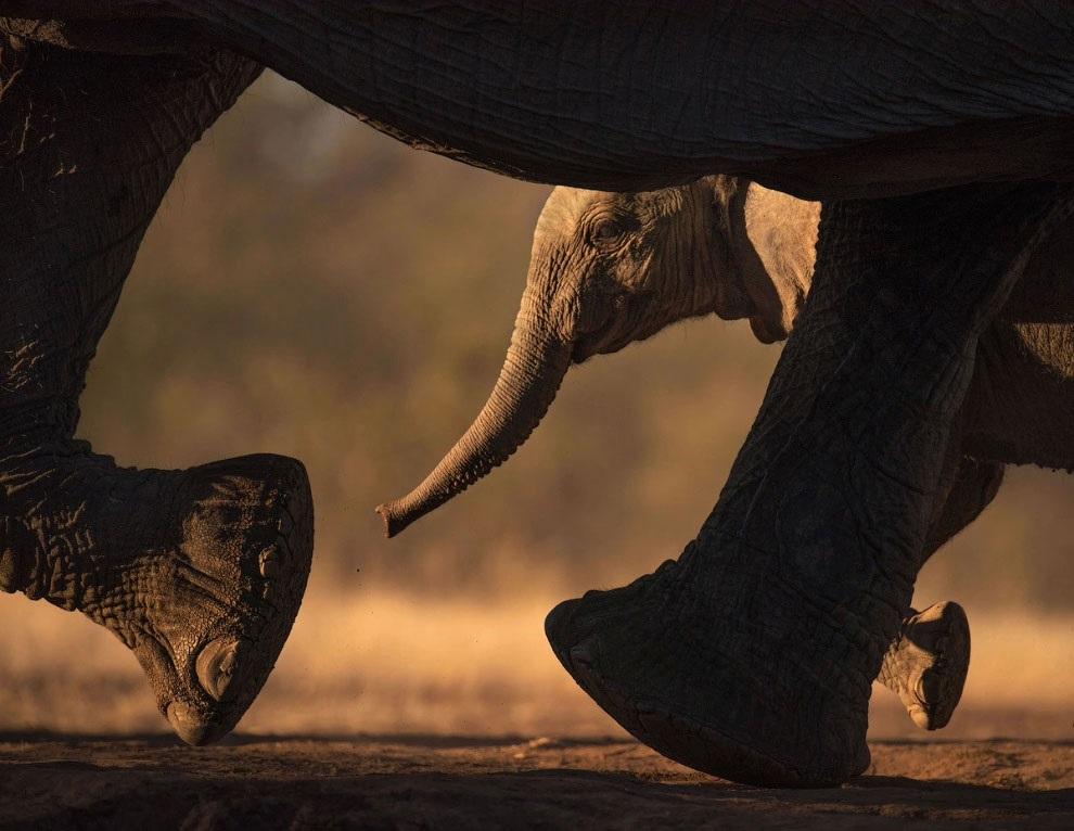 Всемирный день слона 12 августа, праздник - картинки (8)