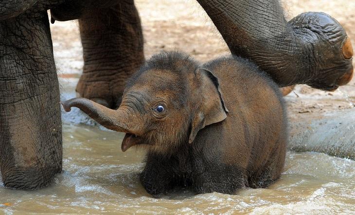 Всемирный день слона 12 августа, праздник - картинки (9)