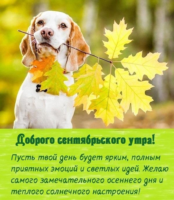 Доброе сентябрьское утро яркие открытки для друзей (11)