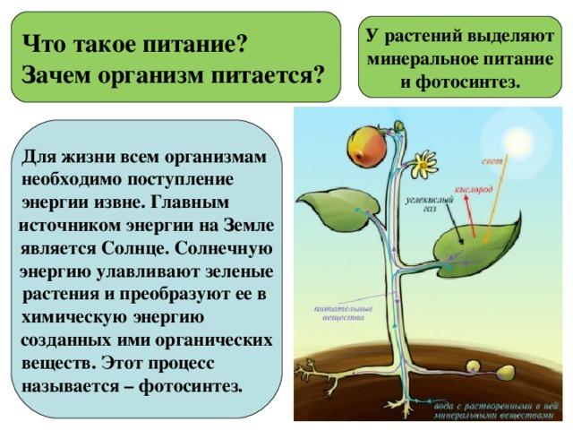 Зачем живым организмам энергия