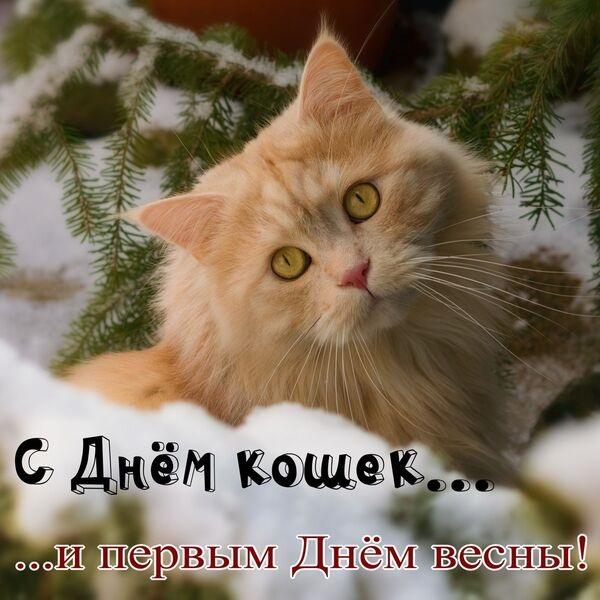 Картинки и открытки с днем кошек на 8 августа (1)