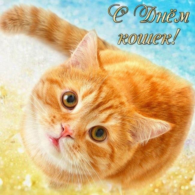 Картинки и открытки с днем кошек на 8 августа (12)