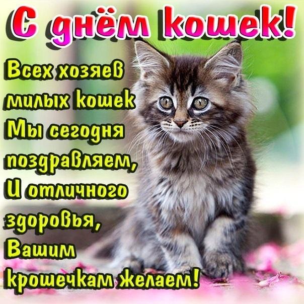 Картинки и открытки с днем кошек на 8 августа (13)