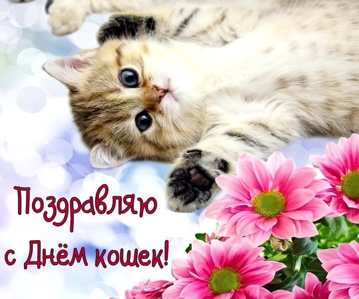 Картинки и открытки с днем кошек на 8 августа (15)