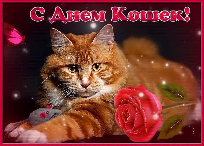 Картинки и открытки с днем кошек на 8 августа (17)