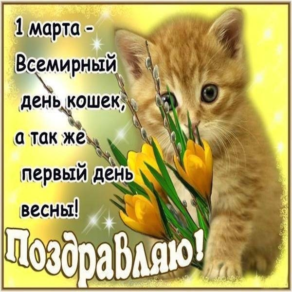Картинки и открытки с днем кошек на 8 августа (19)
