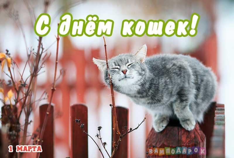 Картинки и открытки с днем кошек на 8 августа (20)