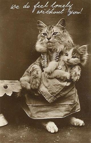 Картинки и открытки с днем кошек на 8 августа (6)