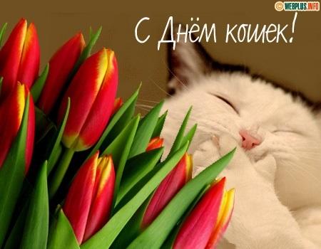 Картинки и открытки с днем кошек на 8 августа (7)