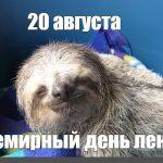 Картинки на Всемирный день лени 20 августа — подборка