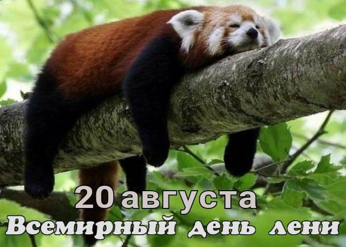 Картинки на Всемирный день лени 20 августа - подборка (23)