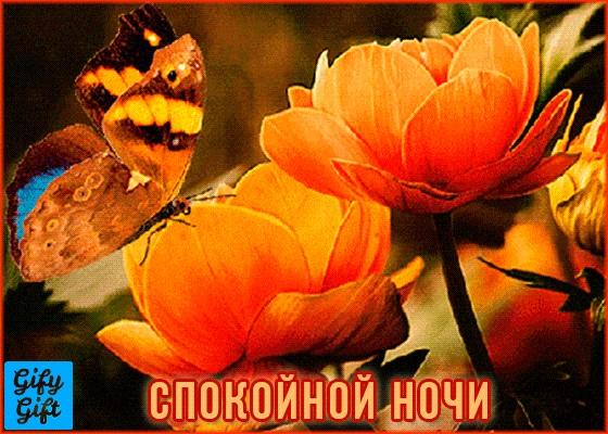 Милые фото доброй ночи сентябрь - подборка открыток (17)