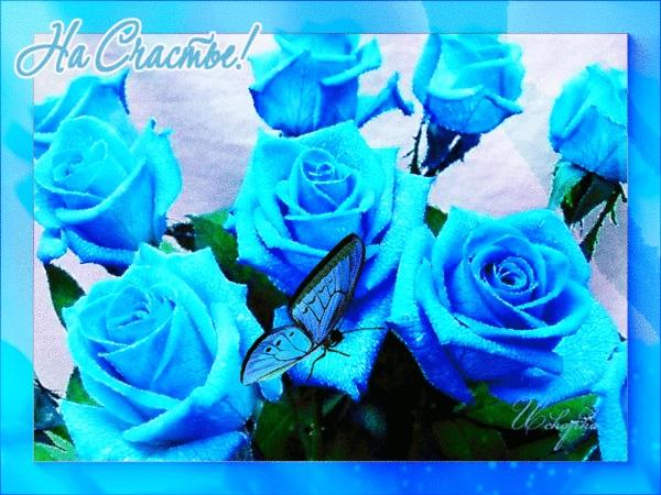 С Днем Рождения синие розы - подборка открыток (12)