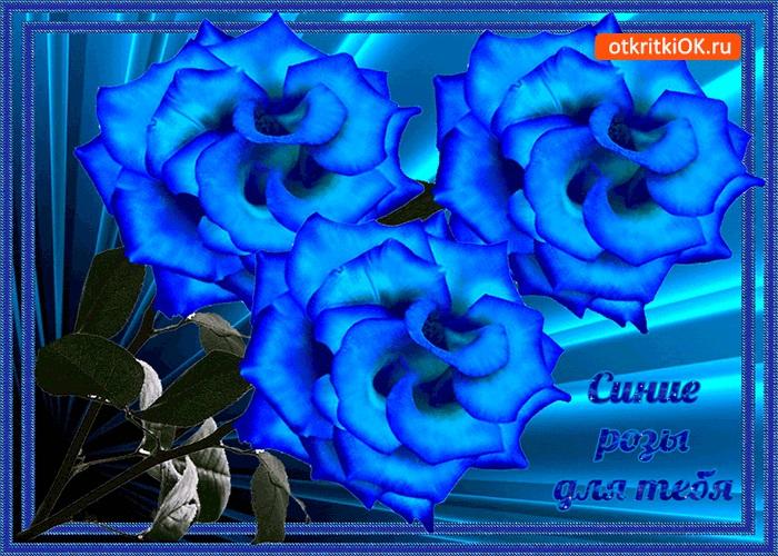 С Днем Рождения синие розы - подборка открыток (6)