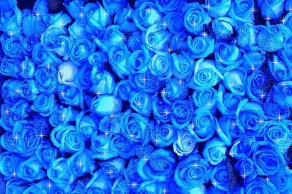 С Днем Рождения синие розы - подборка открыток (9)