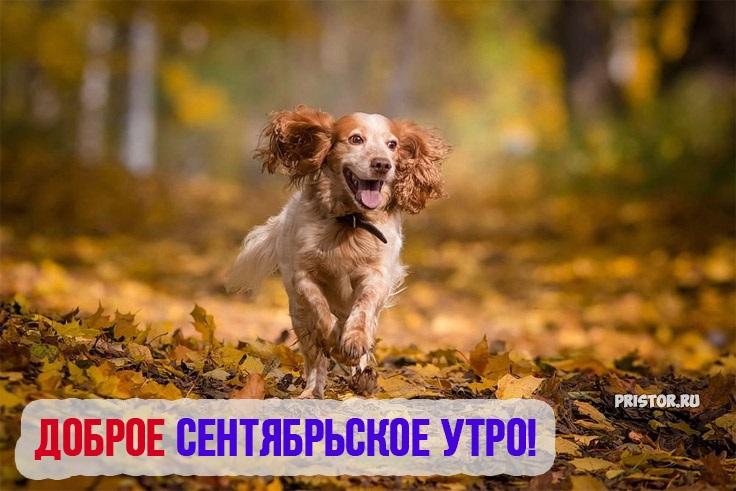 С добрым утром сентябрь - красивые картинки и открытки (9)