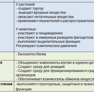 Функции каждой органеллы