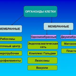 Части клеточных органелл и их функции 2