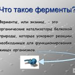 Что такое ферменты? Роль ферментов