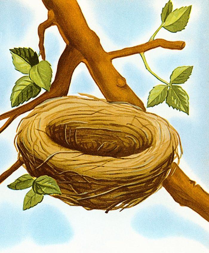 Гнездо на дереве - красивые рисунки для детей (12)