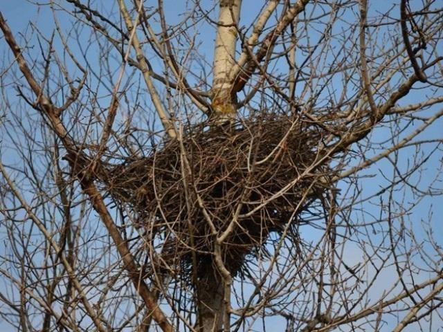 Гнездо на дереве - красивые рисунки для детей (13)