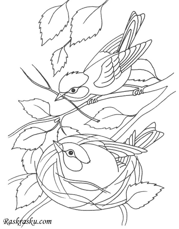 Гнездо на дереве - красивые рисунки для детей (14)