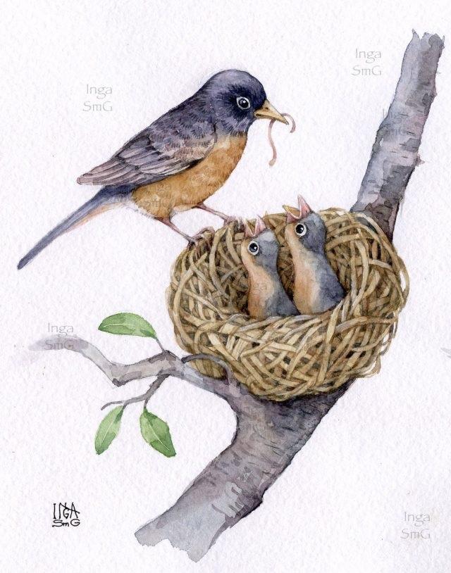 Гнездо на дереве - красивые рисунки для детей (15)
