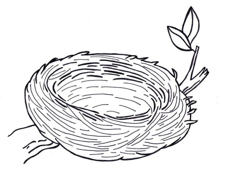 Гнездо на дереве - красивые рисунки для детей (18)