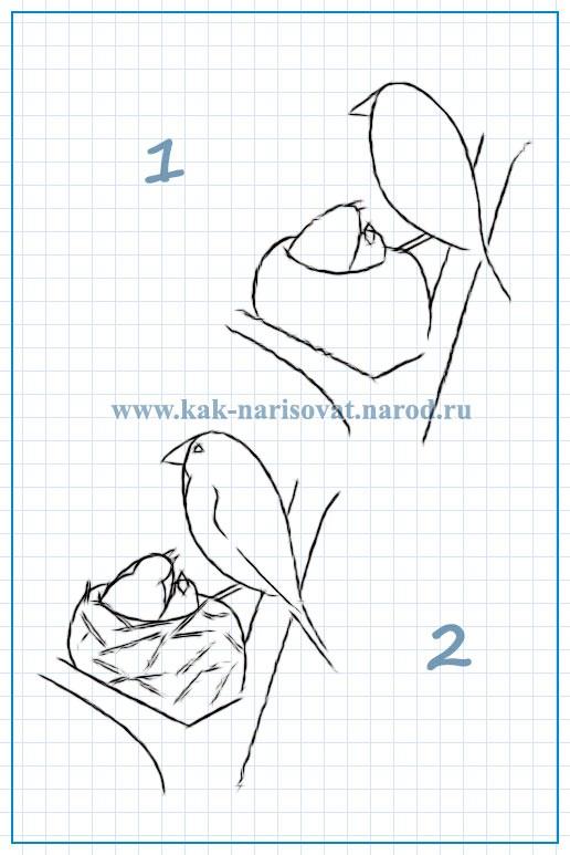 Гнездо на дереве - красивые рисунки для детей (19)