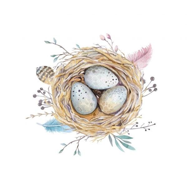 Гнездо на дереве - красивые рисунки для детей (2)
