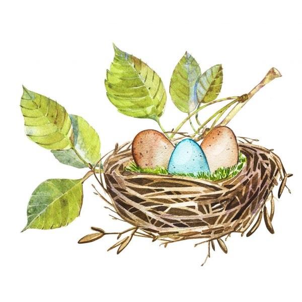 Гнездо на дереве - красивые рисунки для детей (22)
